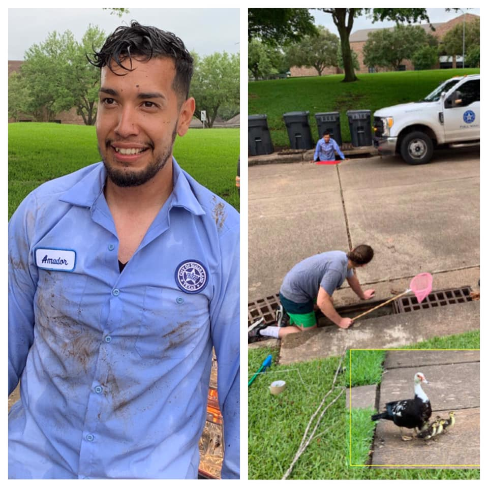 Public Works Employee Saves Ducklings